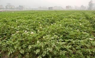 जलवायु अनुकूलित खेतीमा उपाय खोज्दै रोल्पाका किसान