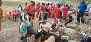 खसी बोका बिक्रीको कमाईले खुसी छन्, स्थानीय महिला